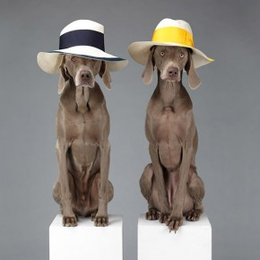 Collaboration Acne Studios + William Wegman