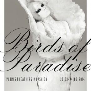 BIRDS OF PARADISE, une exposition incontournable
